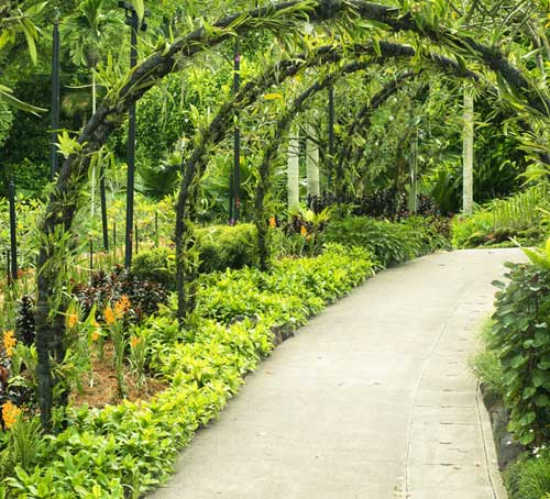 Singapore Botanic Gardens green path through the gardens